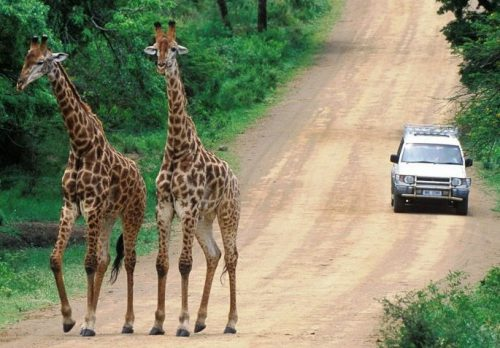 Sudafrica Fly & Drive-Parchi e Swaziland